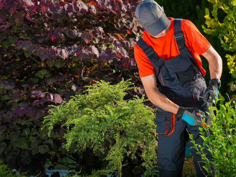 diseño de jardines mantenimiento lima peru