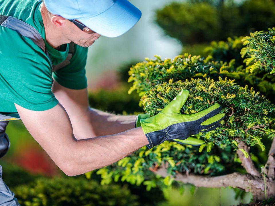venta de plantas lima peru, ornamentales, frutales